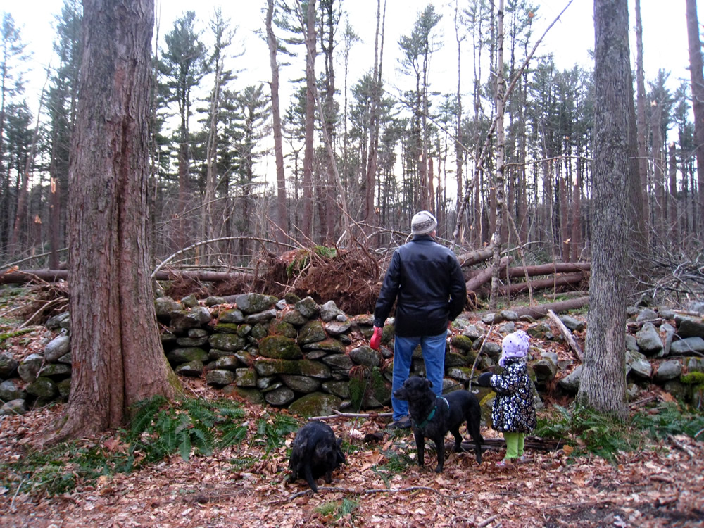 looking at fallen trees 2